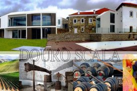 <p class= annonceFrom >Vila Real immobilier</p> | Propriété rurale de 23 hectares - Cidadelhe | BVP-DA-647